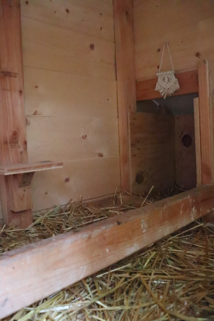 Learn how to winterize a chicken coop naturally. We're expecting a snow storm in the Pacific Northwest so I'm doing a full coop clean out and taking some measures to make sure our backyard friends are warm and happy in the snow. Check out www.theduvallhomestead.com/winterize-chicken-coop for all the details!   #chickenkeeping #winterizechickencoop #chickencoop #backyardchickens #chickensinthewinter #howtokeepchickenswarminthewinter #howtotakecareofchickens #chickens #hens #chickensofinstagram #farming #backyardfarm #suburbanfarm #suburbanfarmer #farmher #homestead #farmhouse