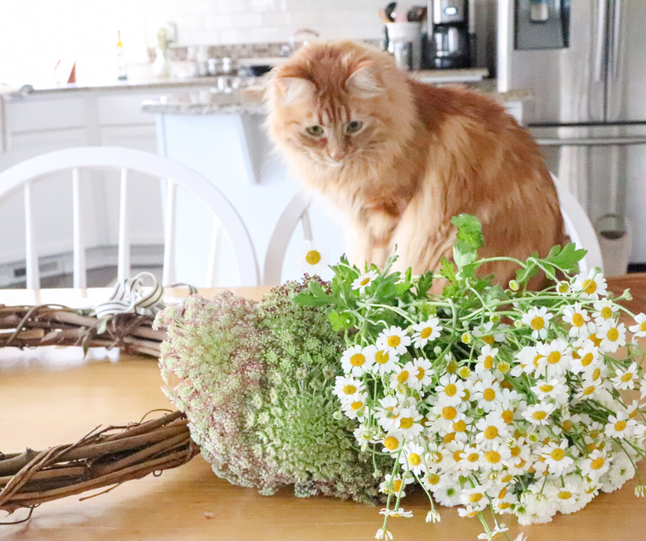 kitty looking at fresh flowers