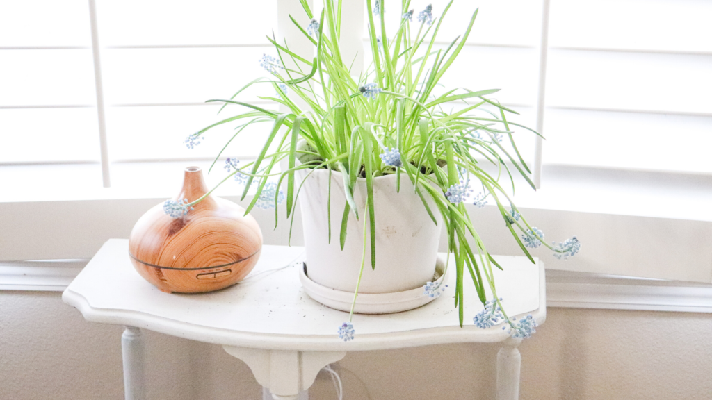 beautiful plants essential oils diffuser