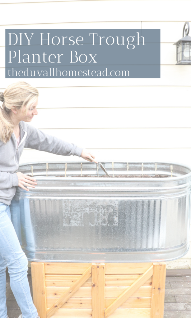 Come see how we made our galvanized horse trough into a planter box this spring at the farmhouse  #spring #planterbox #horsetrough #trough #galvanized #seeds #garden #homestead #farmhouse #plantingseeds #diy #DIYplanterbox #simpleplanterbox #cederwoodstand #gardening #simple #easy #basic #inspiration #gardeninspo #farmhouseinspo #farmhousegardenideas #diyfarmhouseplanterbox