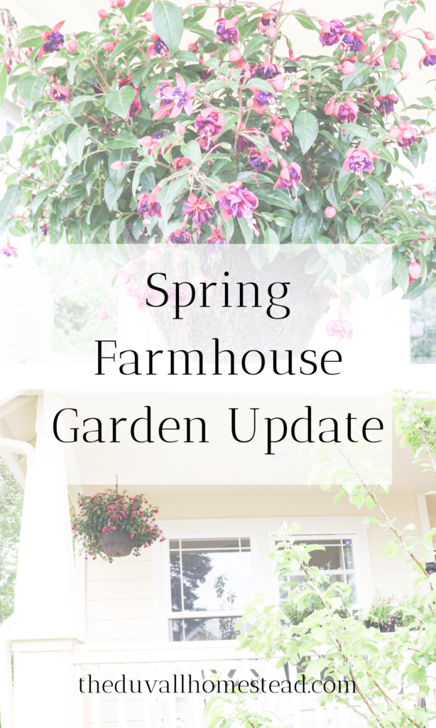 Spring Farmhouse Garden Update #1  #spring #farmhouse #garden #farmhousegarden #farmhousedecor #homedecor #simpledecor #outdoordecor #homestead #gardening #greenthumb #ideas #simple #diy #projects