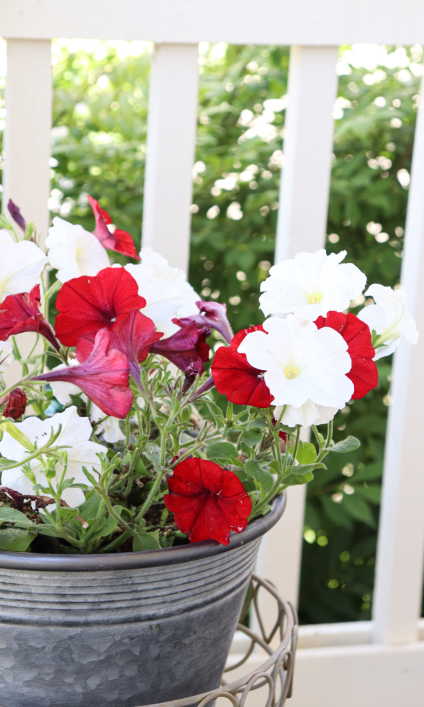 red and white flowers  #frontporch