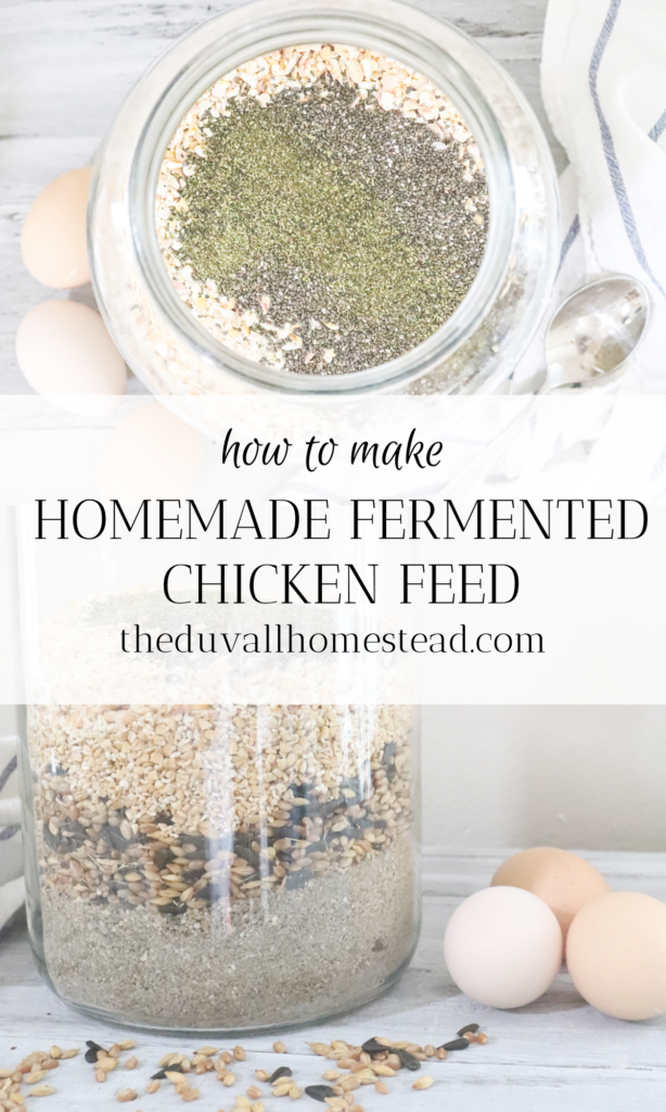 Learn how to make an easy, gut-healthy and delicious fermented chicken feed for rich dark yellow eggs. Saves you money, wastes less, and extra-healthy for your beloved backyard ladies!  #backyardchickens #fermented #chickenfeed #fermentedchickenfeed #howtomakechickenfeed #homemade #chickens #feed #scratch #grain #whattofeedchickens #chickenfeedrecipe #healthychickentreats #organic #guthealthy #recipe #chickenkeeping #homesteading #poultry #richeggs