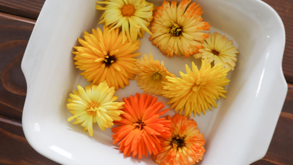 Learn how to grow calendula and use it to make a healing oil for your skin and body.