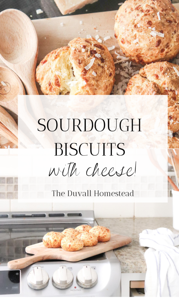 These cheesy sourdough biscuits are the perfect crunchy-on-the-outside and moist, cheesy on the inside appetizer or side dish that uses sourdough and probiotics! I don't know about you, but I love when healthy combines with delicious, and that's exactly what this recipe does :)  #sourdoughlover #biscuits #sourdoughbiscuits #cheese #appetizer #bestfood #recipes #bestrecipes #sourdoughrecipes #sourdoughdiscard #fermented #probiotics #delicious #sidedish #cheesebread #cheesebiscuit #dinner #breakfast #lunch