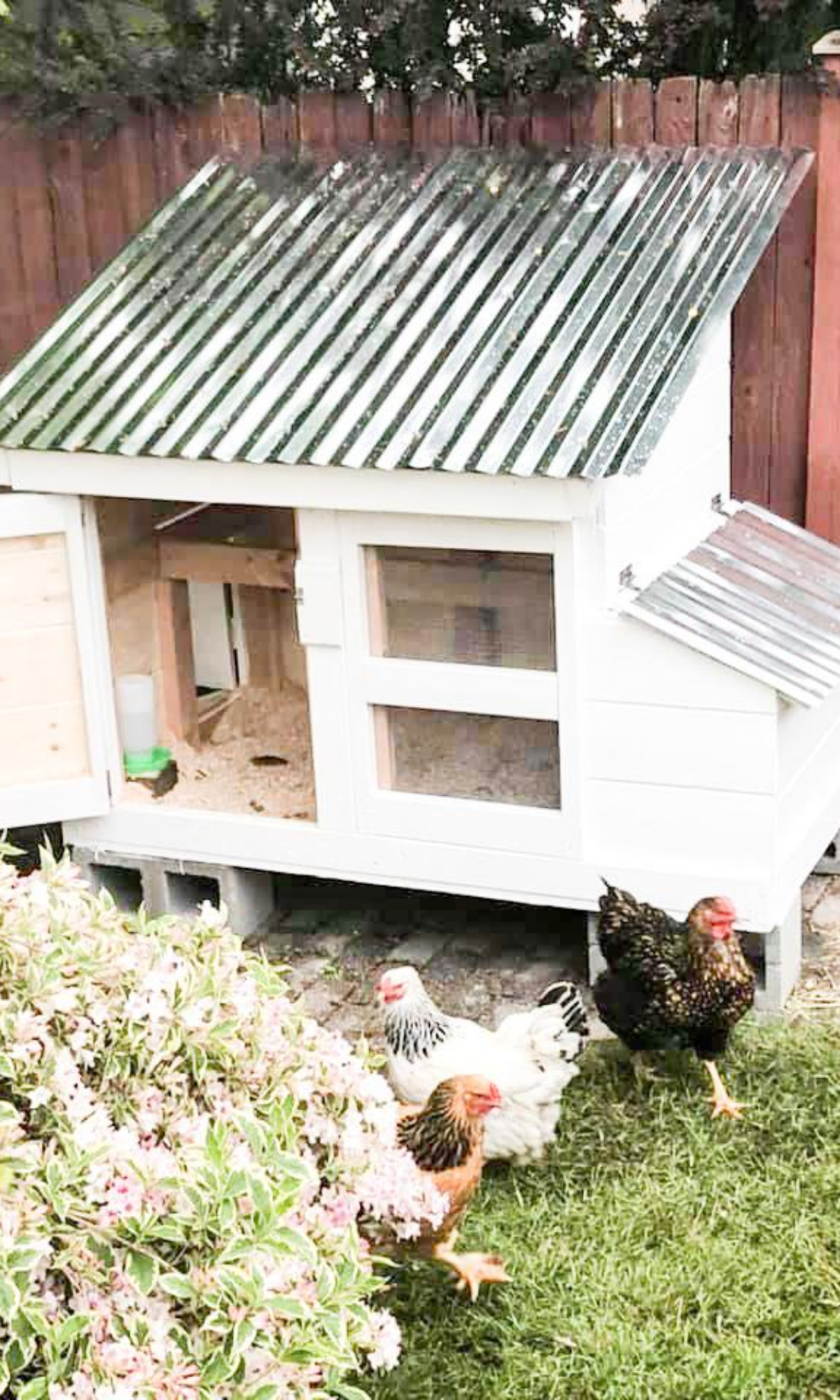 3 how to build a chicken coop easy DIY chicken coop small flock backyard chicken keeping for beginners